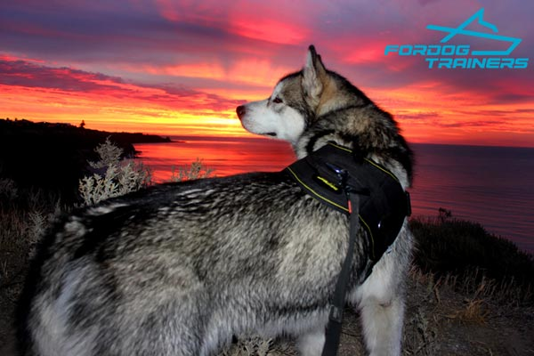 Nylon Malamute Harness for Any Weather Walking