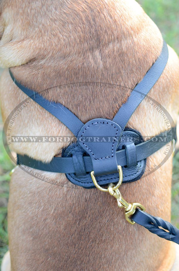Back Plate of Leather Bullmastiff Harness
