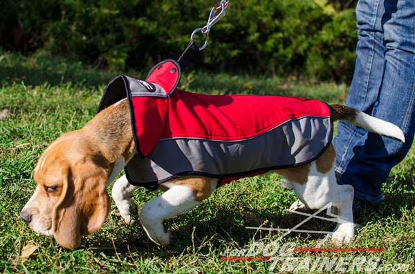 Dog Nylon Harness Easy To Adjust With Touch Fastener for Beagle