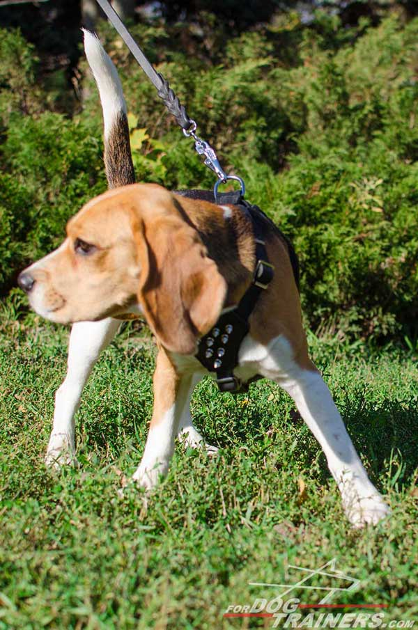 Beagle Leather Harness Designer High Quality Well-Made