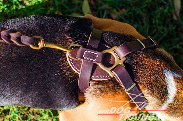 Leather Dog Harness Brown Made So As To Fit The Body Correctly