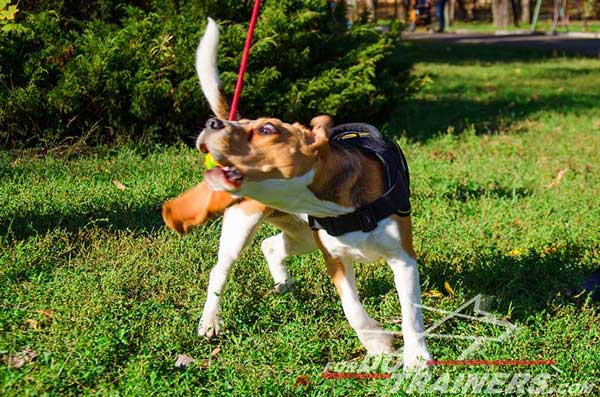Dog Harness Nylon Padded Protects The Beagle's Back From Hitting