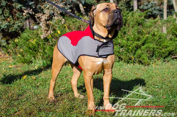 Nylon Dog Harness Insulating Heat for Cane Corso