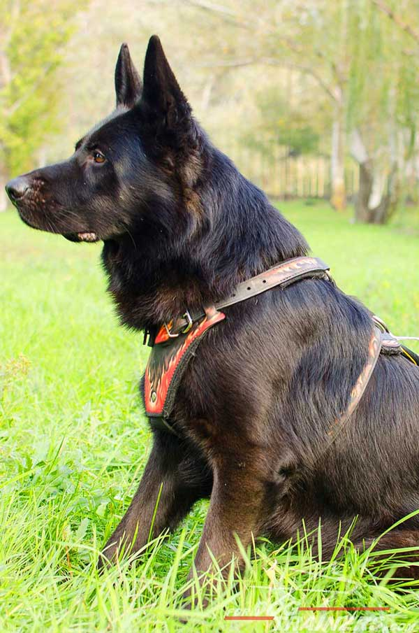 Leather Dog Harness Well-Made to Follow The Torso's Lines