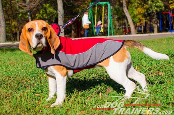 Red-Grey Nylon Beagle Harness for Walking in Cold Season