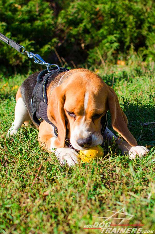 Pulling Dog Harness Nylon Well-Built for Beagle's Safety and Comfort