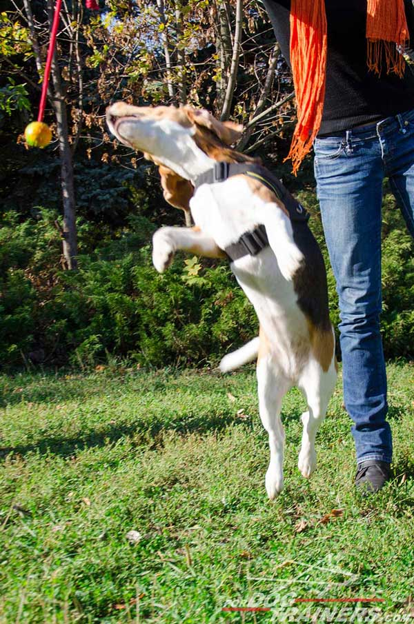Quality Nylon Beagle Harness Allows The Dog To Jump Up As High As Possible