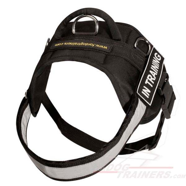Durable Metal D-Ring Meant for Leash Attachment