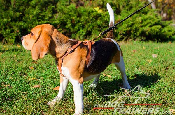 Beagle Harness Lightweight Tan Leather Absolutely Comfortable