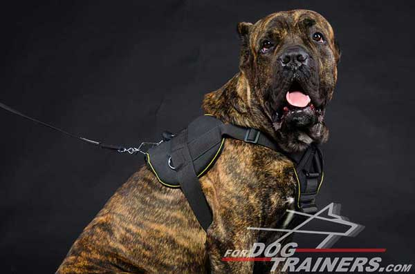 Tracking Nylon Cane Corso Harness Wear-Resistant Tearproof