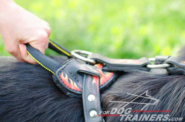 Comfortable Heavy-Duty Upper Control Handle for Management of A Big Canine