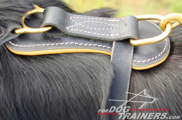 Welded Solid Ring on Dog Harness