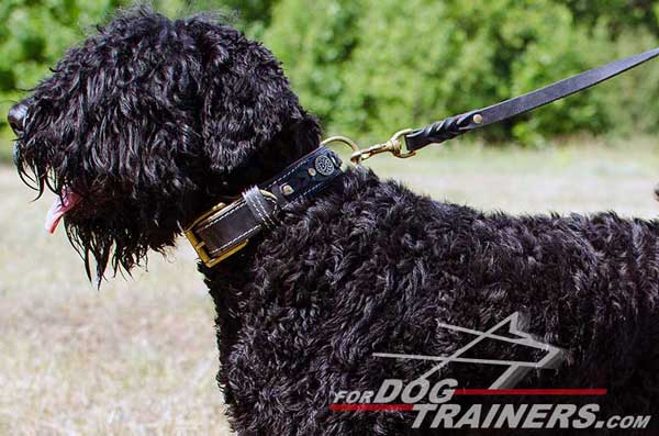 Strong Black Russian Terrier Leash