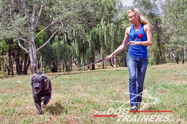 Strong Caucasian Shepherd Leash