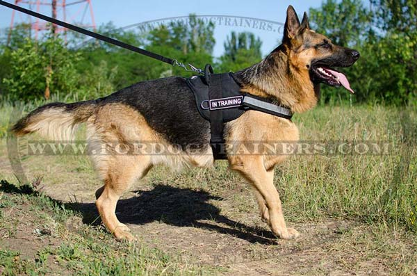 German Shepherd Leash for Daily Use