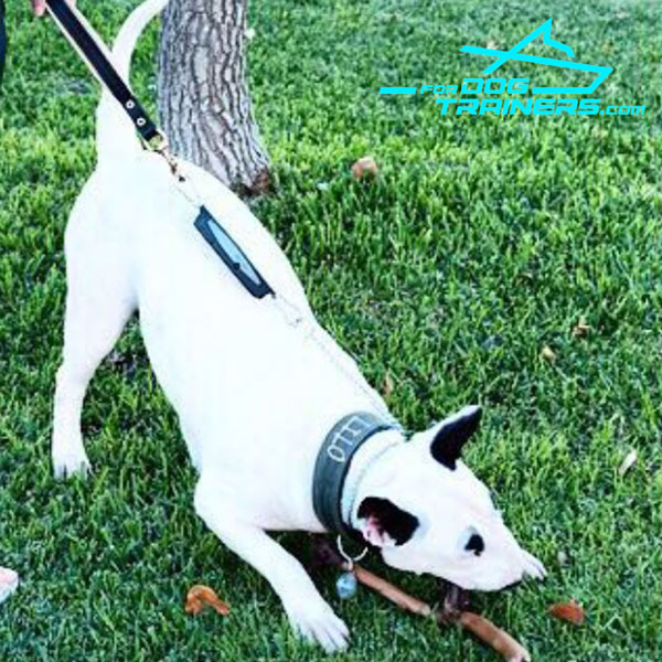 Supreme Control Bull Terrier Short Lead with Floating Ring