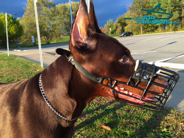 Easy Adjustable Doberman Muzzle