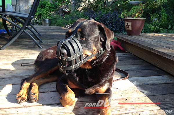 Easy to adjust Rottweiler muzzle