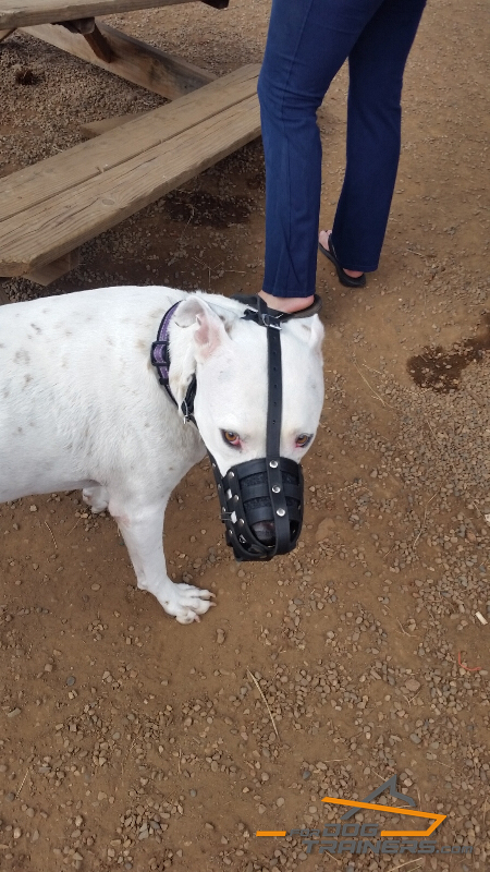 Nose Padded Leather Basket Muzzle for Pitbull