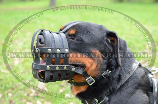 Air circulated Rottweiler dog muzzle