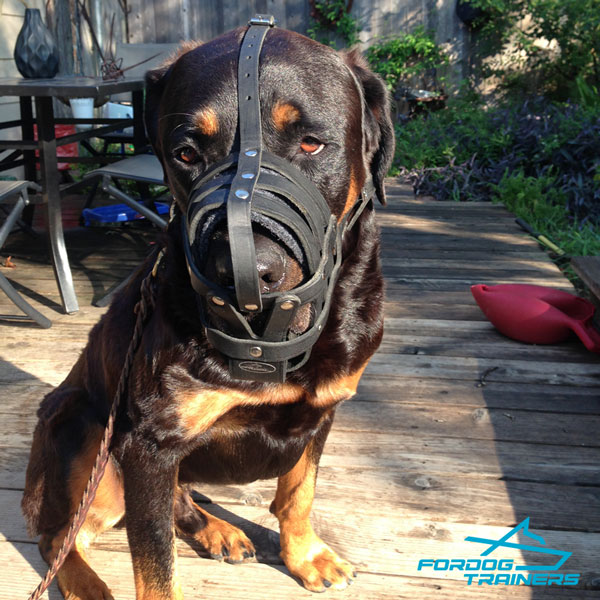 Comfortable Mesh Rottweiler Muzzle with Padding