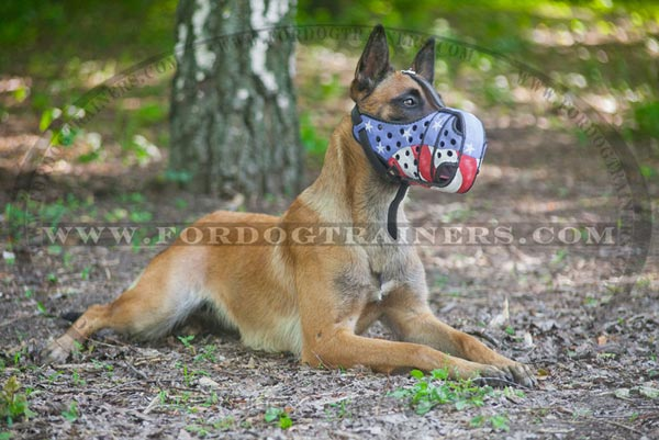 Belgian Malinois wearing painted muzzle