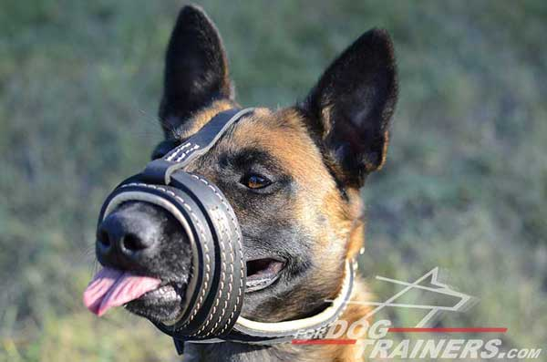 Nappa Leather Padded Open Nosed Melgian Malinois Muzzle