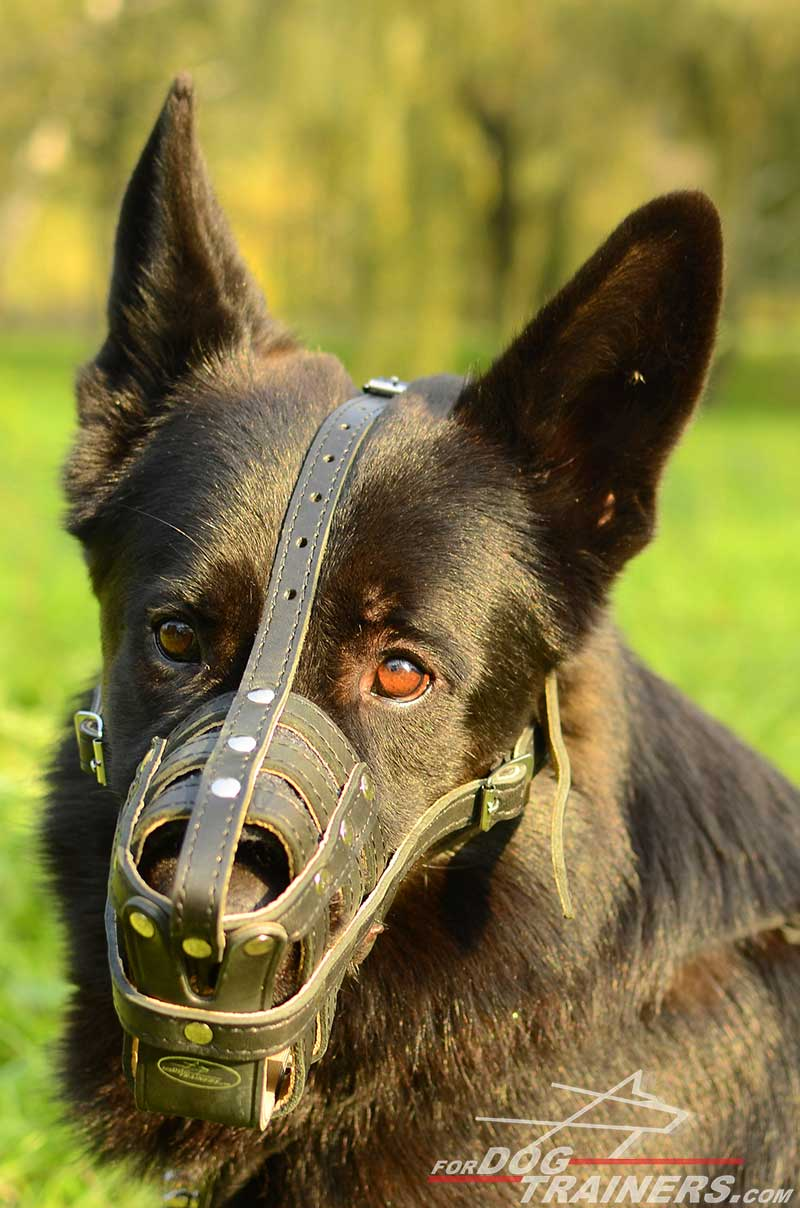 muzzle shepherd german dog leather basket easy adjustable muzzles royal gsd perfect breathable lightweight fordogtrainers