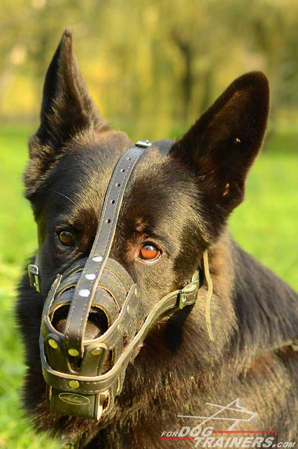 Leather Basket Muzzle for GSD