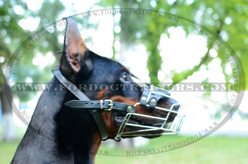 metal dog muzzle