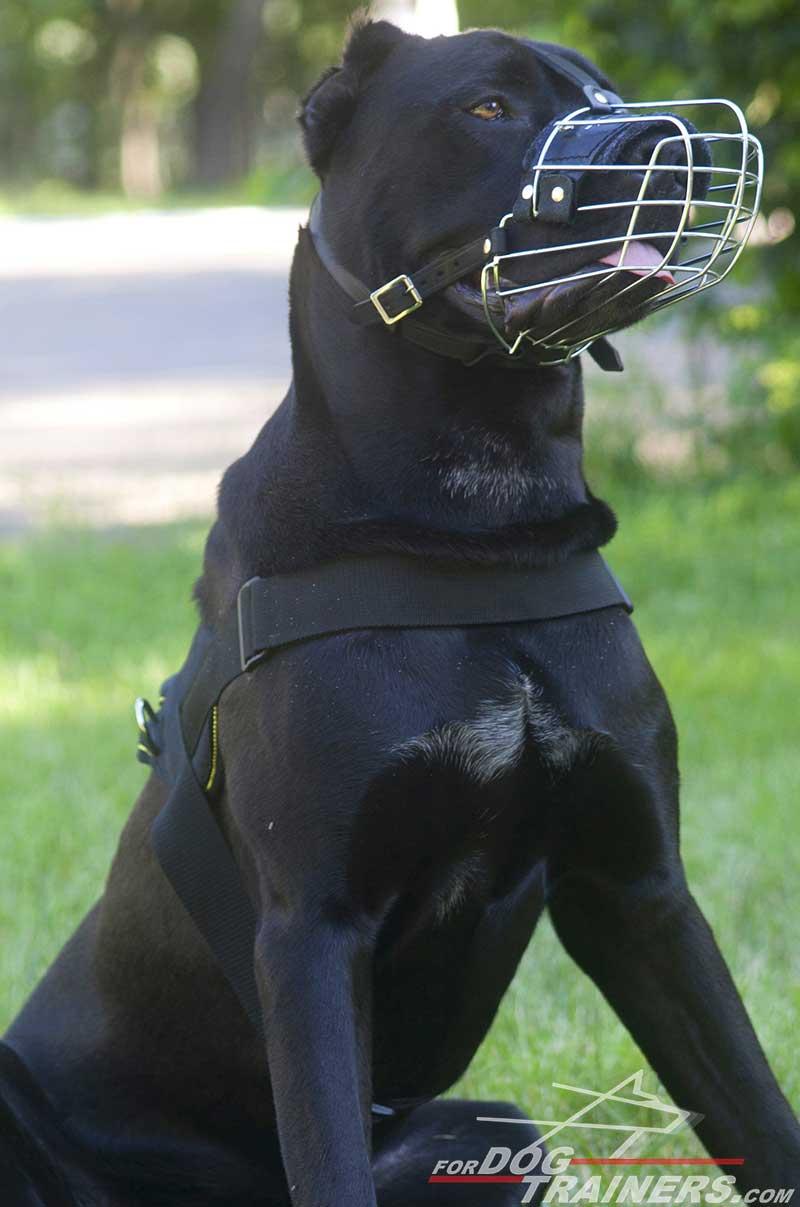 Cane Corso Basket-like Metal Dog Muzzle [M4###1073 Light Basket Wire ...