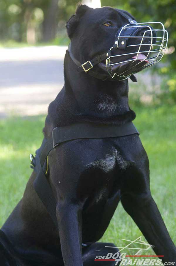 Wire Cage Cane Corso breed Muzzle