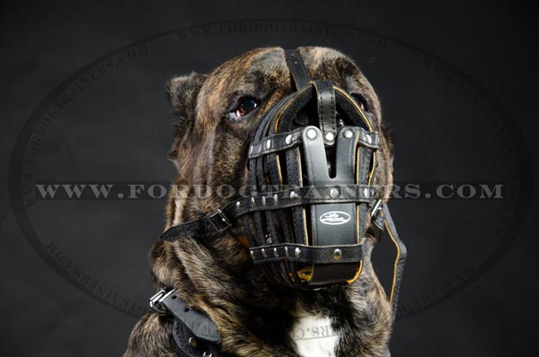 Nappa Padded Leather Basket Muzzle for Cane Corso