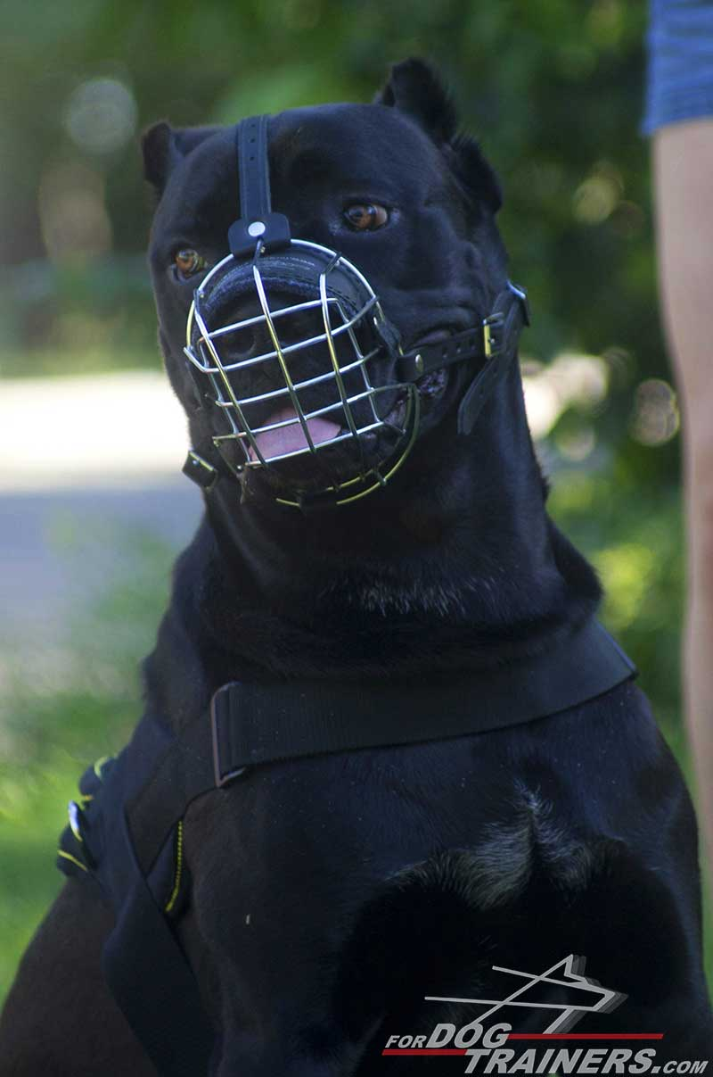 Cane corso basket like metal dog muzzle m41073 light basket wire wire cage cane corso dog muzzle with padded nose area geenschuldenfo Images