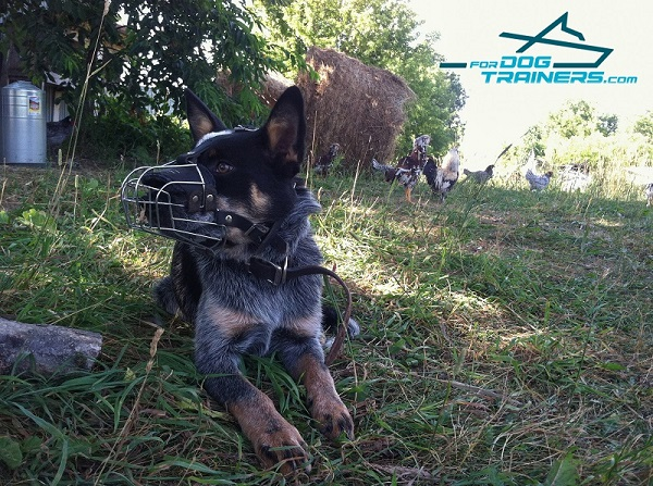 Wire Basket Blue Heeler Muzzle  - Easy Adjustable