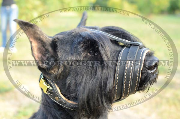 Comfortable leather muzzle for Riesenschnauzer