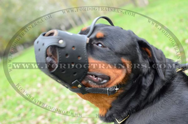 Rottweiler training dog muzzle
