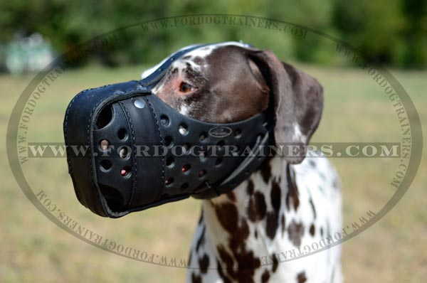 Dalmatian well fitting training leather dog muzzle