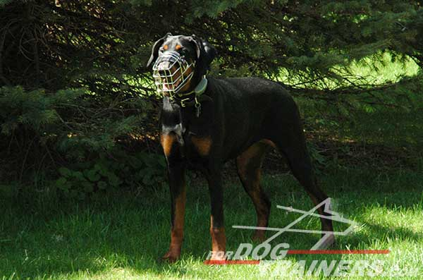 Strong Wire Cage Muzzle for Doberman walking
