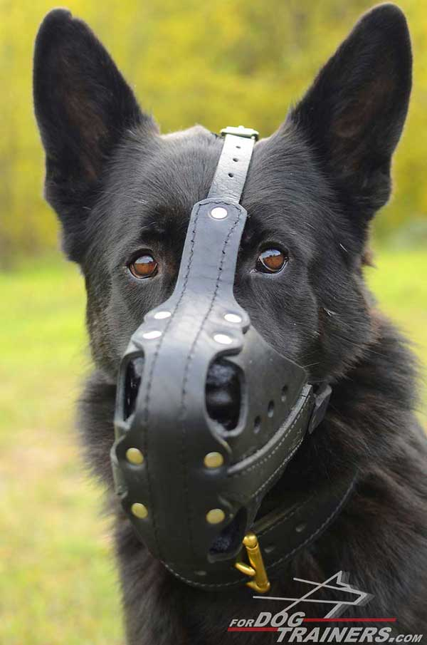 Riveted Leather German Shepherd Muzzle for Agitation Training