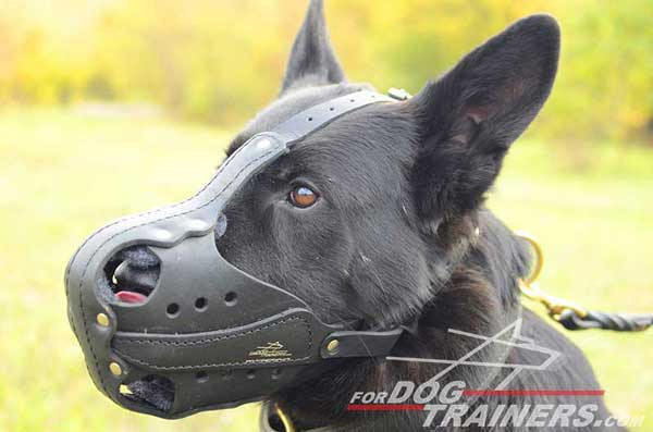 Agitation Training Leather German Shepherd Muzzle
