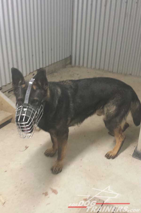 Training Leather and Wire Cage German Shepherd Muzzle
