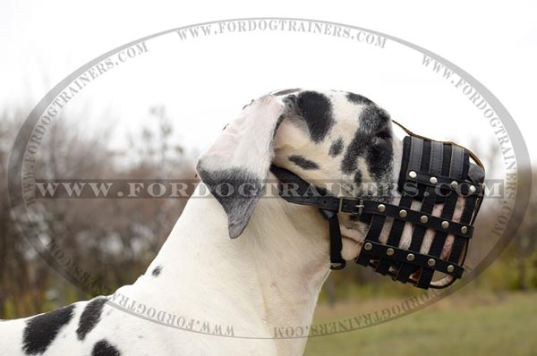 Nappa Leather Padded Basket Muzzle for Great Danes