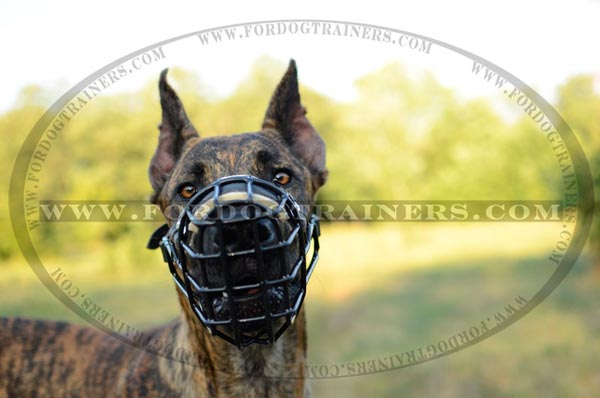Great Dane winter wire muzzle