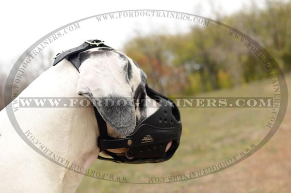 Great Dane Leather Muzzle for Agitation Muzzle