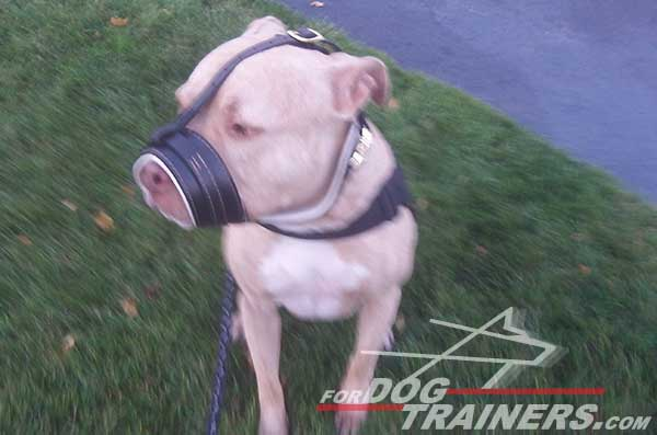 Easy adjustable loop-like leather muzzle for Pitbull
