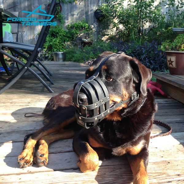 Ventilated Leather Rottweler Baket Muzzle with Padding