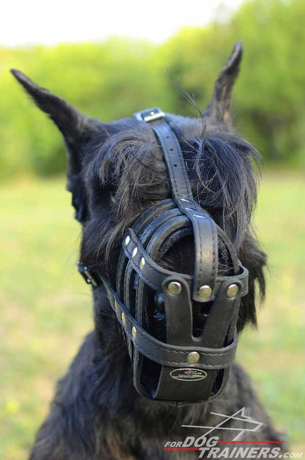 Riesenschnauzer Leather Muzzle with Padded Nose