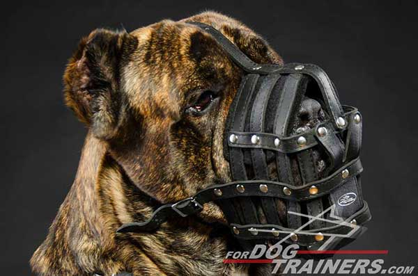 Leather dog muzzle for Cane Corso