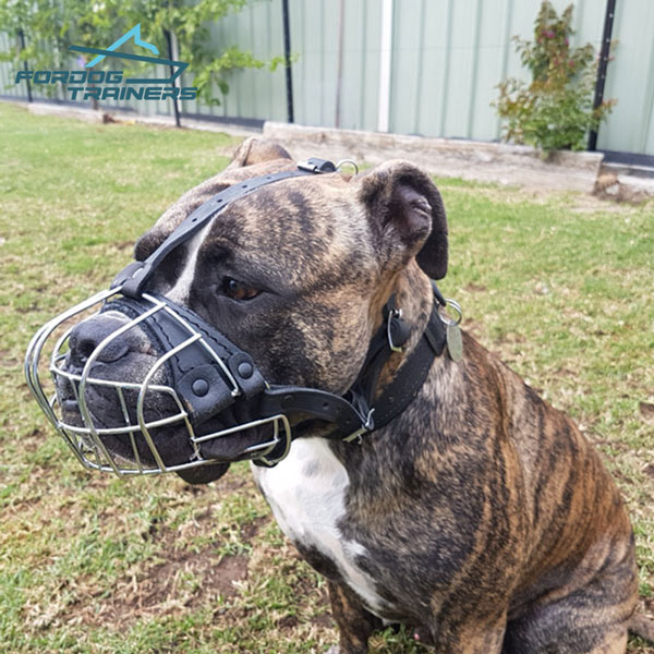 Lightweight Wire Cage Dog Muzzle Super Ventilation for Everyday Use